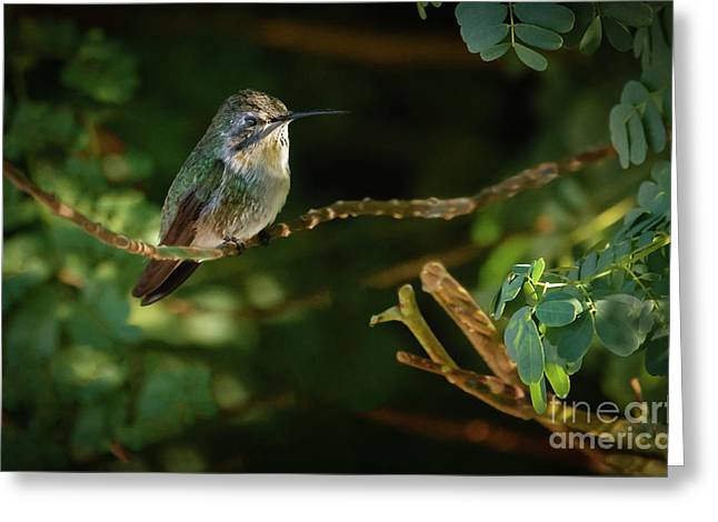 Resting Anna Greeting Card by Robert Bales
