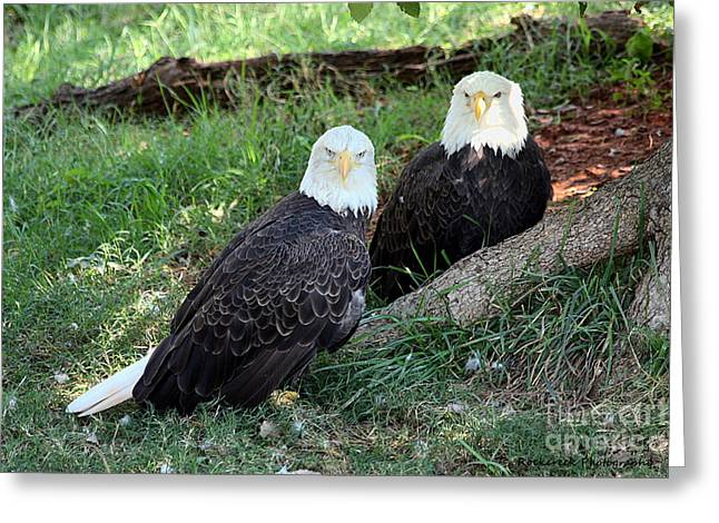 Resting Bald Eagles Greeting Card