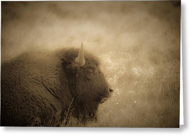 Resting Buffalo Greeting Card by Patrick  Flynn