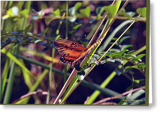 Resting Butterfly Greeting Card by Kay Lovingood