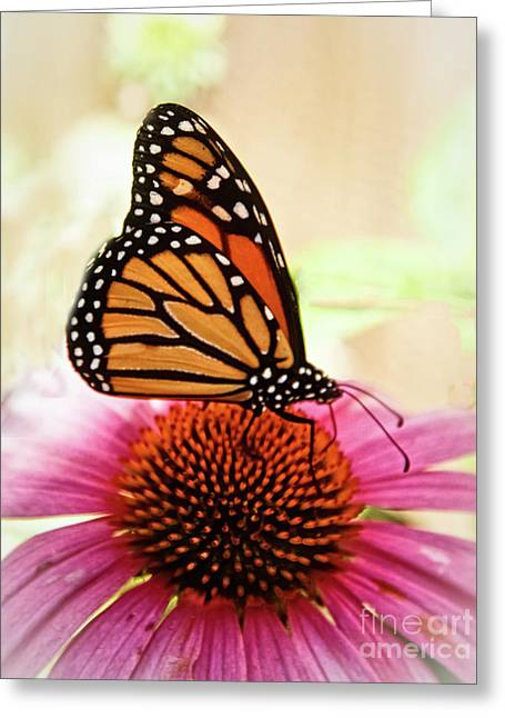 Resting Monarch Butterfly Greeting Card