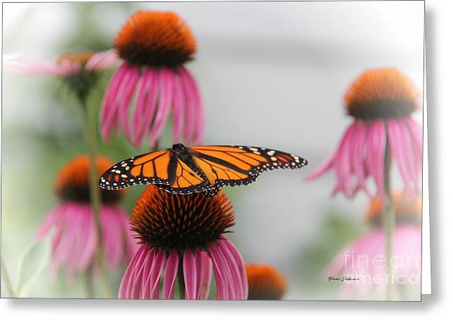 Resting Monarch Greeting Card by Yumi Johnson