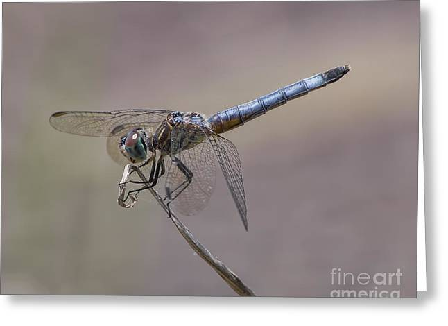 Resting My Wings Greeting Card by Liz Masoner