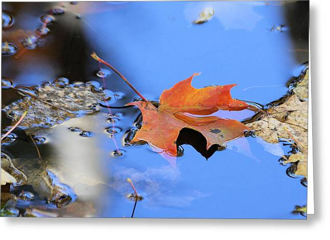 Greeting Card featuring the photograph Resting On Gold And Blue by Doris Potter