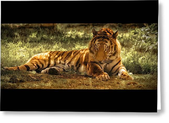 Resting Tiger Greeting Card by Chris Boulton