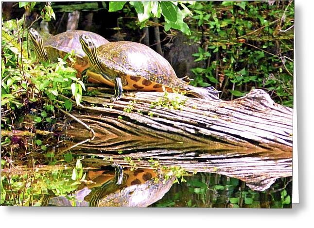 Resting Turtles Greeting Card by Sharon Eng