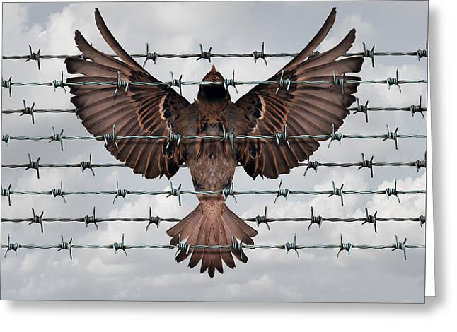 Restricted Freedom Greeting Card by Dumitru Pogolsa