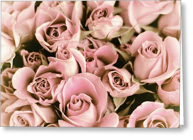 Reticent Rose Greeting Card by Jessica Jenney