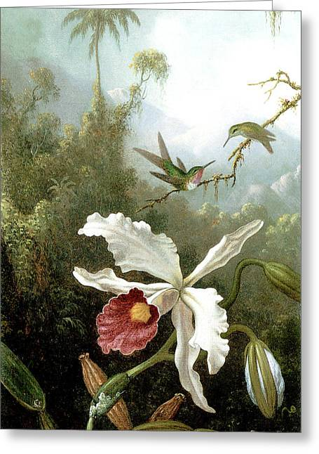 Retouched Masters - Orchid And Hummingbirds In Tropical Forest Greeting Card by Audrey Jeanne Roberts