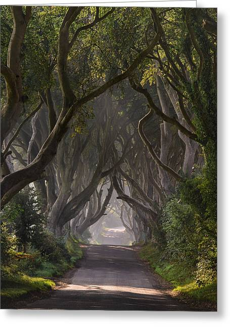 Return To The Dark Hedges Greeting Card by Andy Gibson