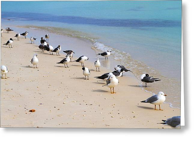 Rhapsody In Seabird Greeting Card