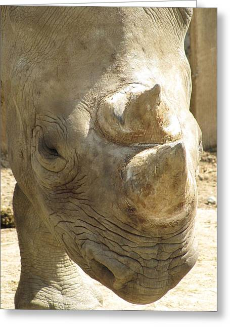 Rhino Closeup Greeting Card by George Jones
