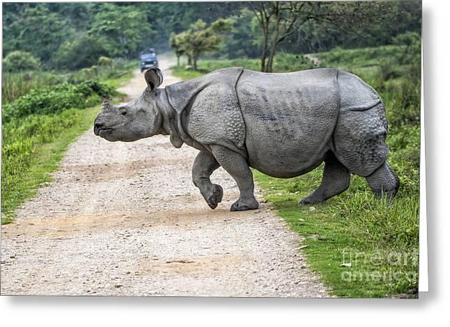 Rhino Crossing Greeting Card