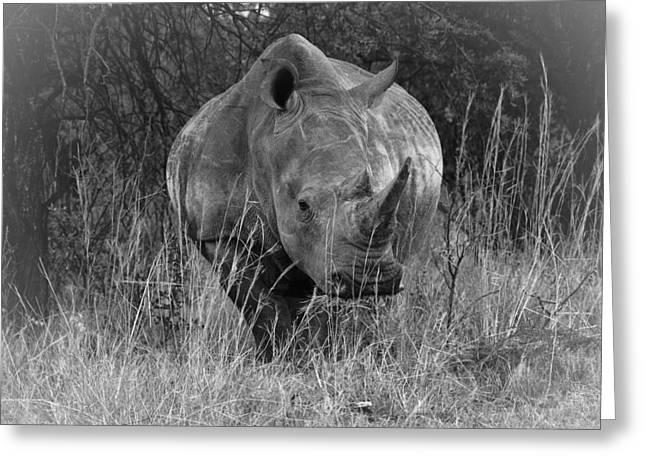 Rhino Greeting Card by Patrick Kain