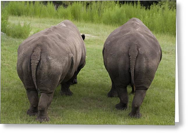 Rhino Rears Greeting Card