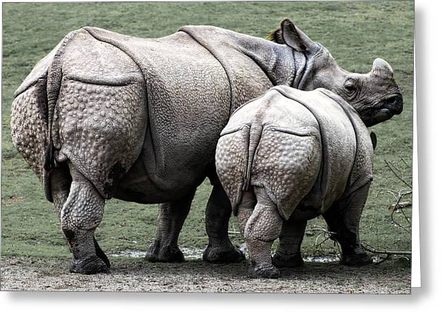 Rhinoceros Mother And Calf In Wild Greeting Card