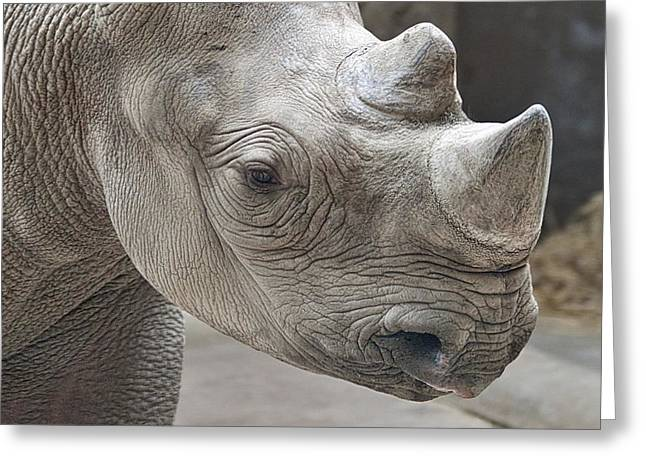 Rhinoceros Greeting Card by Tom Mc Nemar