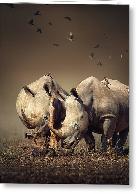Rhino's With Birds Greeting Card