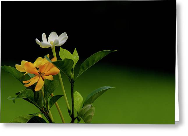 Rhoda's Kula Gardenia Greeting Card by Don Mitchell