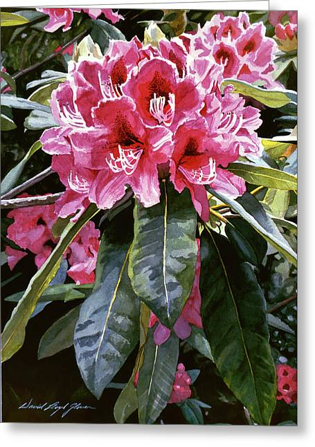Rhodo Cluster Greeting Card by David Lloyd Glover