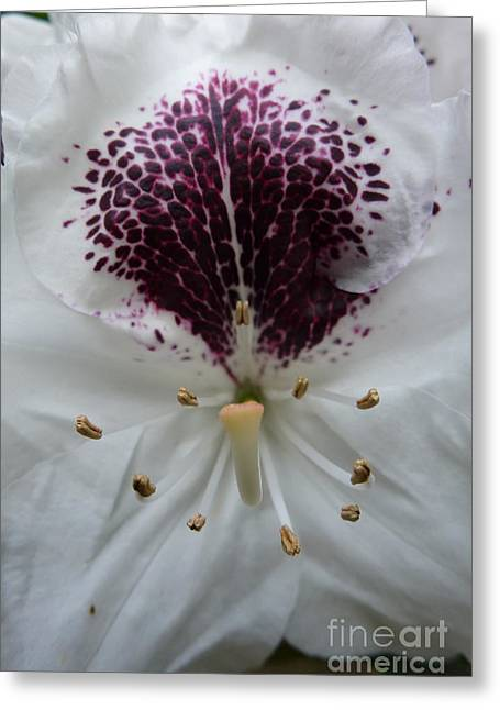 Rhododendron 2 Greeting Card