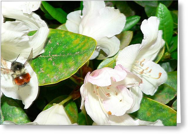 Greeting Card featuring the photograph Rhododendron And Bee by Larry Keahey