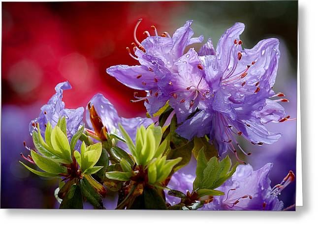 Rhododendron Bluebird Greeting Card