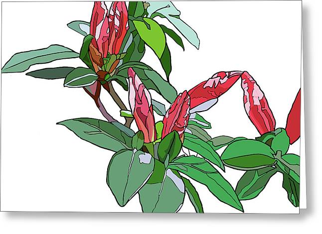 Rhododendron Buds Greeting Card