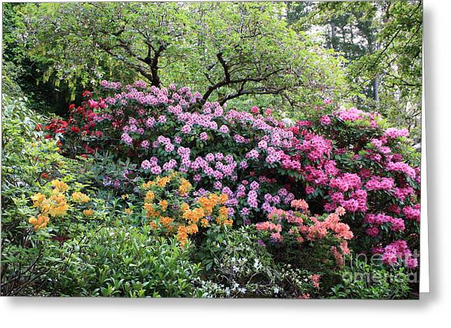 Rhododendron Hill Greeting Card by Carol Groenen