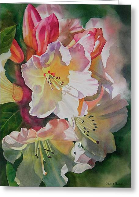 Rhododendron Shadows Greeting Card by Sharon Freeman