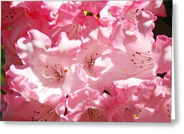 Rhododendrons Flowers Art Print Pink Rhodies Baslee Troutman Greeting Card by Baslee Troutman