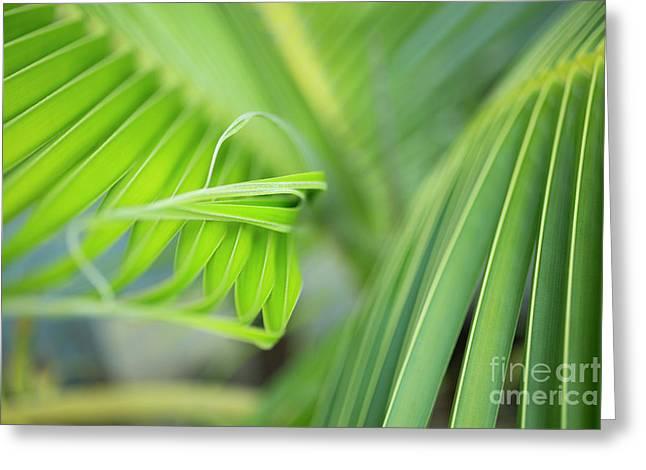 Rhythm Of A Palm Frond Greeting Card