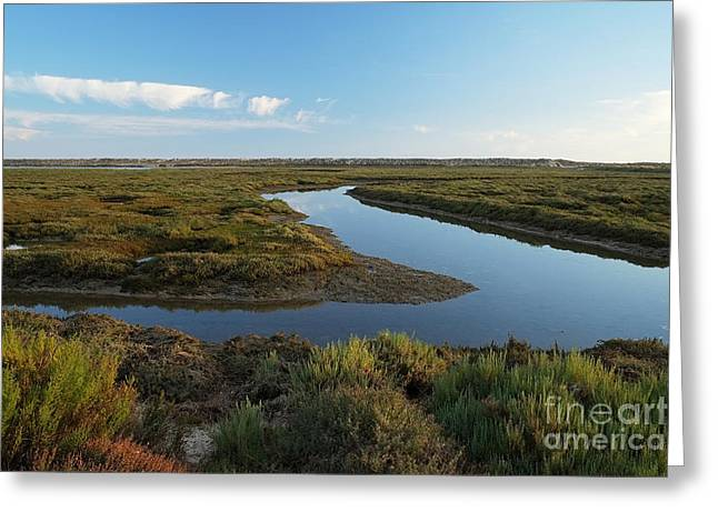 Ria Formosa Water Stream Greeting Card by Angelo DeVal