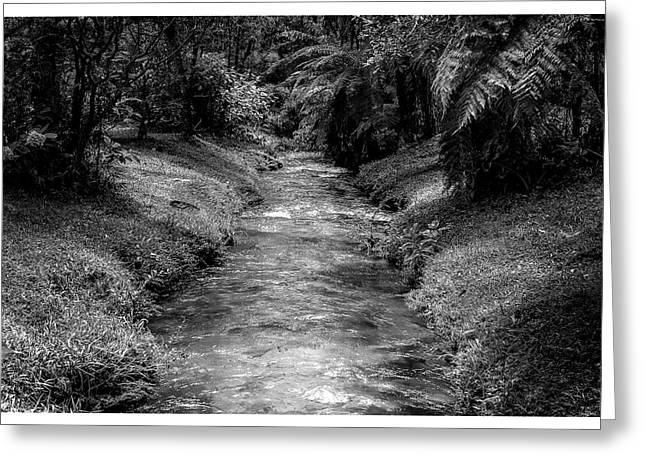 Riacho-horto-parque Estadual-campos Do Jordao-sp Greeting Card