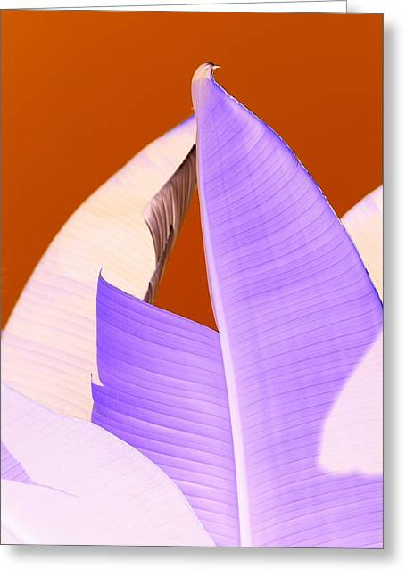Ribbed In Violet Greeting Card by Florene Welebny