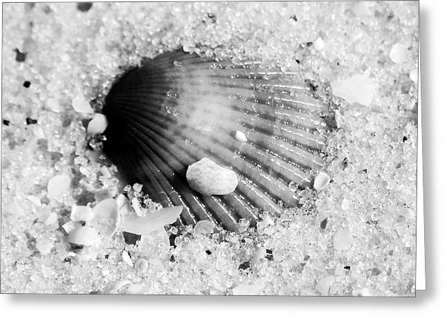Ribbed Sea Shell Macro Buried In Fine Wet Sand Square Format Black And White Greeting Card