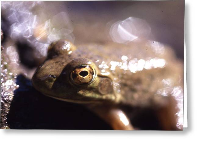 Ribbit Greeting Card by Curtis J Neeley Jr