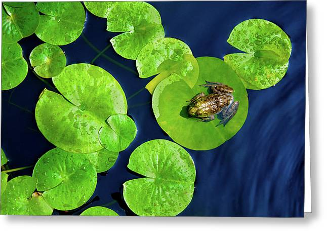 Ribbit Greeting Card by Greg Fortier
