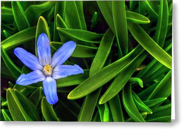 Ribbons Of Spring Greeting Card