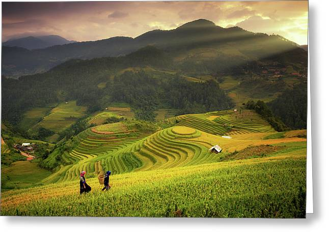 Rice Fields On Terraced Of Mu Cang Chai Greeting Card by Anek Suwannaphoom