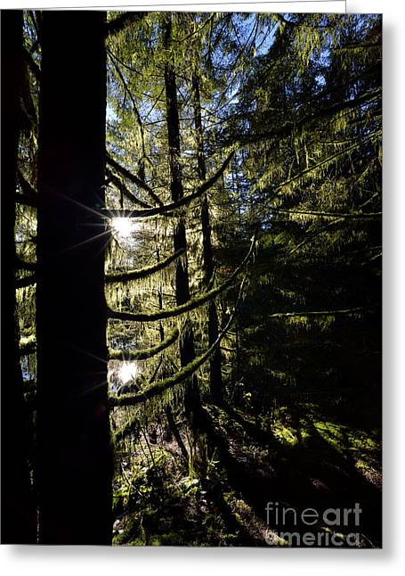 Rice Lake Dramatic Trees Greeting Card by Terry Elniski