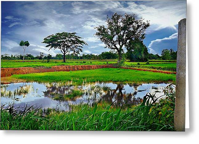 Rice Paddy View Greeting Card