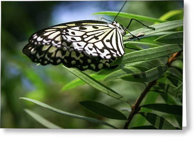 Rice Paper Butterfly - Greeting Card