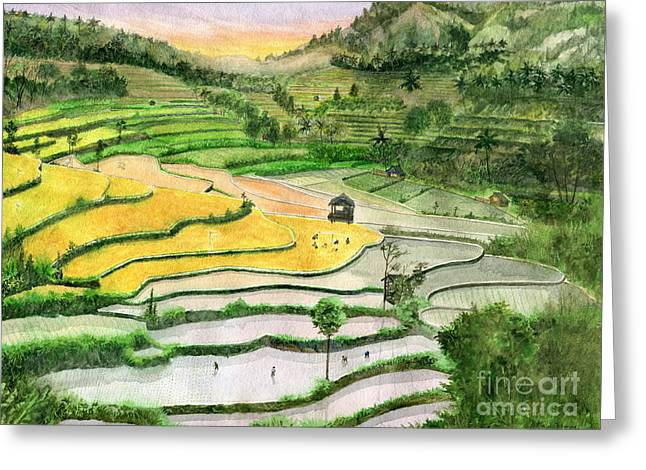 Ricefield Terrace II Greeting Card