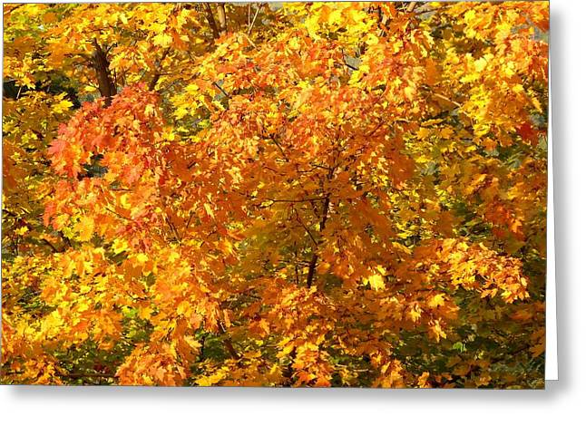Rich Autumn Color Greeting Card by Will Borden