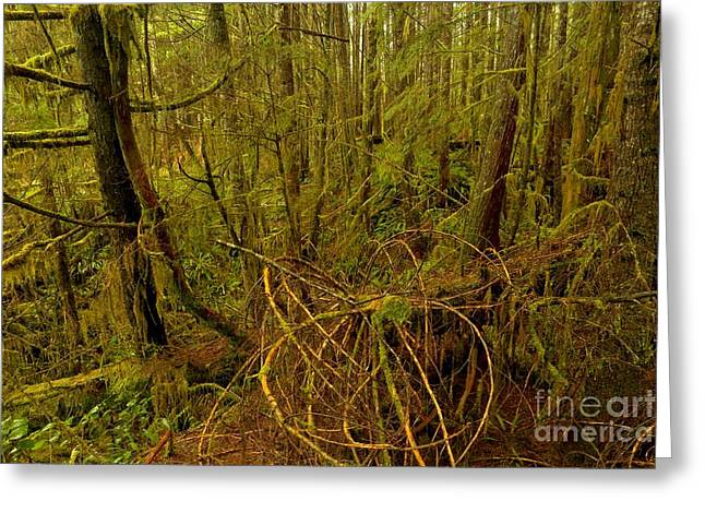 Rich Colors In The Rainforest Greeting Card by Adam Jewell