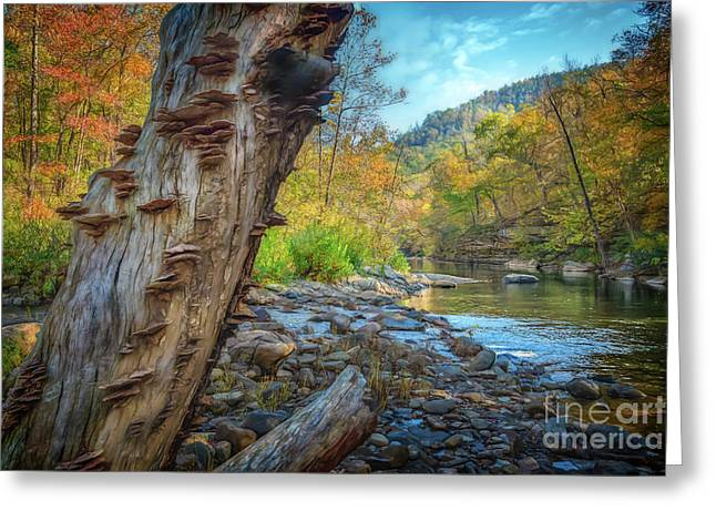 Richland Creek Greeting Card by Larry McMahon