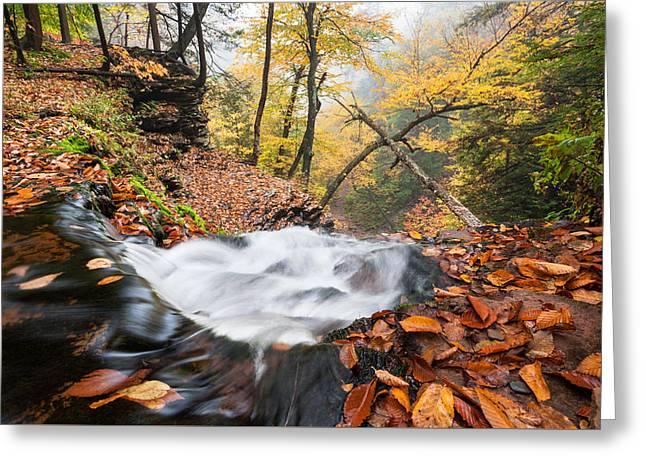Ricketts Glen State Park Ganoga Falls Allegheny Mountains Pennsylvania Greeting Card by Mark VanDyke