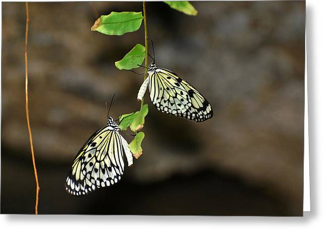 Greeting Card featuring the photograph Right And Left Wings by Teresa Blanton