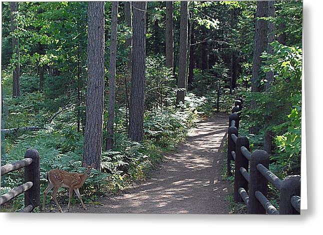 Right Of Way Greeting Card by Terence McSorley
